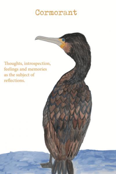 Cormorant Illustration